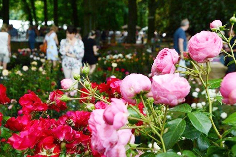 deurne leeft rozenfeest rivierenhof