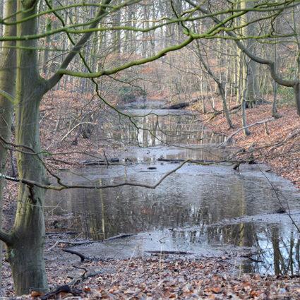 deurne leeft water ertbrugge tekort overstromingen walter vercauteren