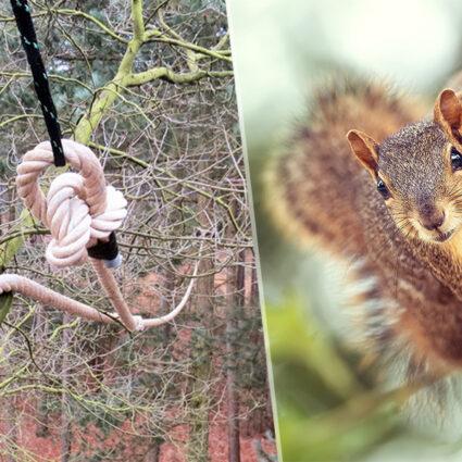 deurne leeft boombruggen alain hoeckx eekhoorn frank vercammen