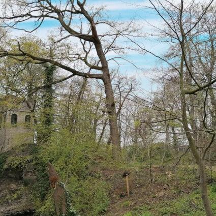 deurne-leeft-boekenbergpark-grot-europees-erfgoed-in-gevaar$