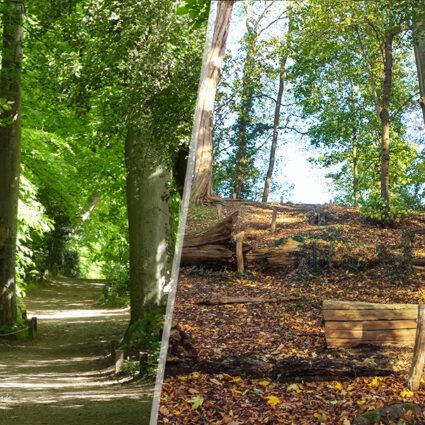 deurne left boekenbergpark bomen rooien vellen frank vercammen