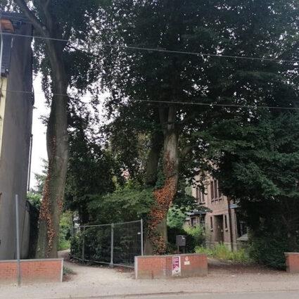 deurne leeft voorzuitzicht wegen paden bomen beuken tjerk sekeris